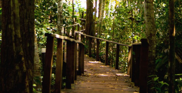Cacoal Selva Park  - Trilhas